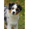 Club canin : Les Trésors d'Edenn