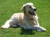 Club canin : cani lupus