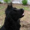 Club canin : la Ballade des Chiens Heureux