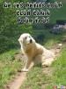 Club canin : Hé les Petits Loup