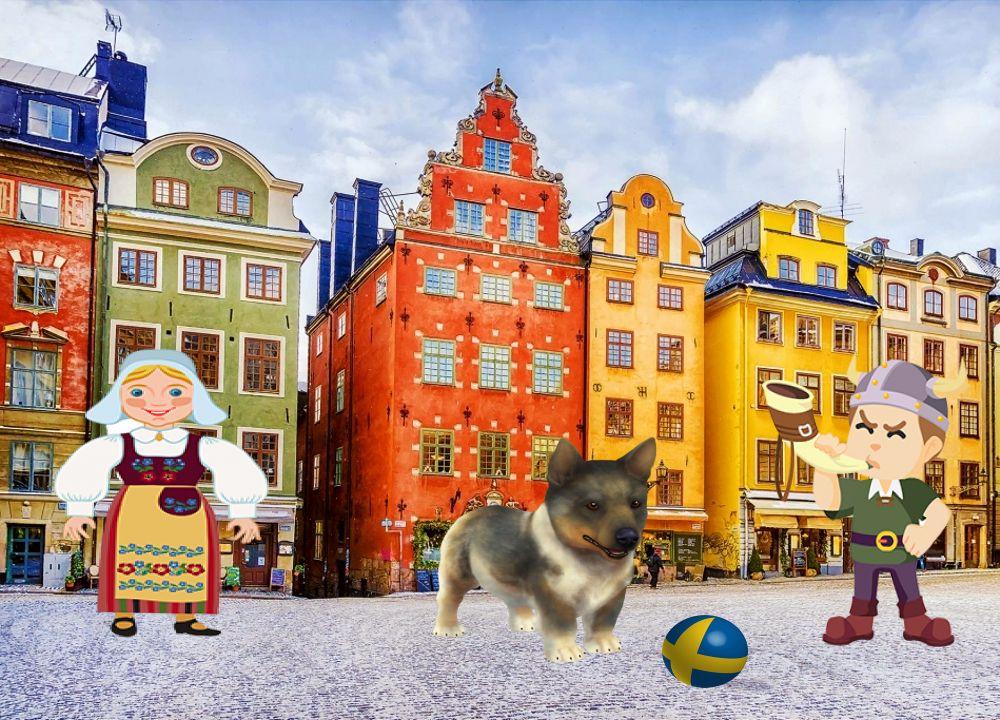 Vava - Vallhund Suédois de 2 mois