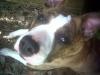 Aldo72 - éleveur canin Dogzer