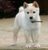 follemieda - éleveur canin Dogzer