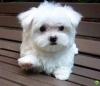 Corni - éleveur canin Dogzer