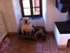 carlamag - éleveur canin Dogzer