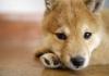 millonfosse - éleveur canin Dogzer