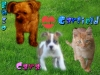 Caramelleenforce - éleveur canin Dogzer