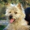 eleus - éleveur canin Dogzer