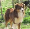 lounalila - éleveur canin Dogzer