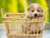sethix - éleveur canin Dogzer