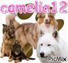 camelia12 - éleveur canin Dogzer