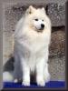 radioshack2340 - éleveur canin Dogzer