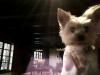 bibi4jetli - éleveur canin Dogzer