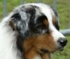 contie - éleveur canin Dogzer