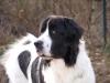 boubou07 - éleveur canin Dogzer