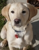 bubuu2 - éleveur canin Dogzer