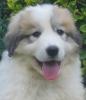 lol33320 - éleveur canin Dogzer