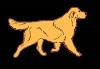 haithem-br - éleveur canin Dogzer