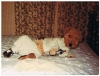 maddymadde - éleveur canin Dogzer