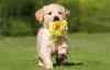 maedu32 - éleveur canin Dogzer