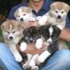 Gribouillejtm - éleveur canin Dogzer