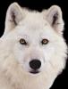 winxsc - éleveur canin Dogzer