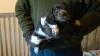 profion - éleveur canin Dogzer