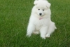 loar - éleveur canin Dogzer