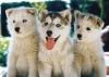 margaux-ILY - éleveur canin Dogzer