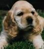 augustin98 - éleveur canin Dogzer