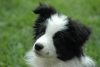 Princess890 - éleveur canin Dogzer