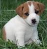 ninis05 - éleveur canin Dogzer