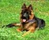 laura907_fr - éleveur canin Dogzer