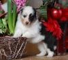 camilloufoliedouce - éleveur canin Dogzer