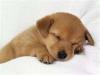 CAROTTE02 - éleveur canin Dogzer