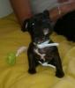 romain59554 - éleveur canin Dogzer