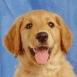 angi48 - éleveur canin Dogzer