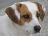 Emeline124 - éleveur canin Dogzer