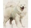 Amelieloume - éleveur canin Dogzer