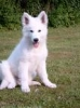wipout11 - éleveur canin Dogzer