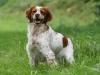 Chiot42 - éleveur canin Dogzer