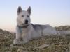 Cali16 - éleveur canin Dogzer