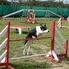 aea1b2c3 - éleveur canin Dogzer