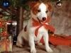 tritonps - éleveur canin Dogzer