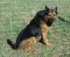 Barbotine - éleveur canin Dogzer