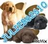 JULIEB62610 - éleveur canin Dogzer