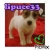 lipuce33 - éleveur canin Dogzer
