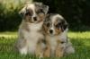 monamour8522 - éleveur canin Dogzer