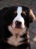 chlochlo6 - éleveur canin Dogzer