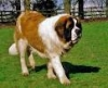moulligasse - éleveur canin Dogzer